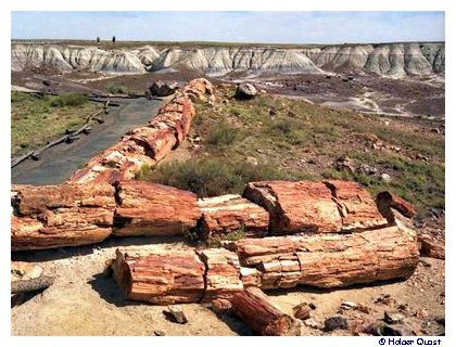 Crystal Forest, Petrified Forest